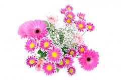flowers-163716_960_720