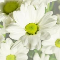 flowers-164860__340
