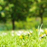 spring-794881__340