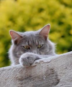 cat-301723__480