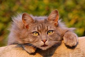 cat-401124__480