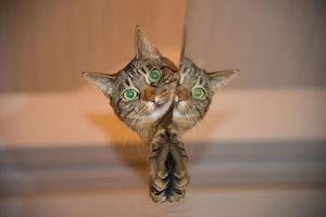 cat-697113__480