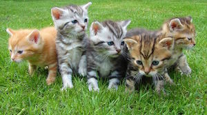 kittens-555822__480